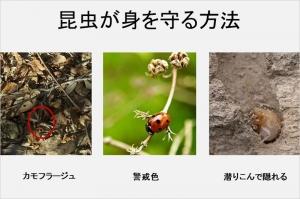 Photo_20201127191001
